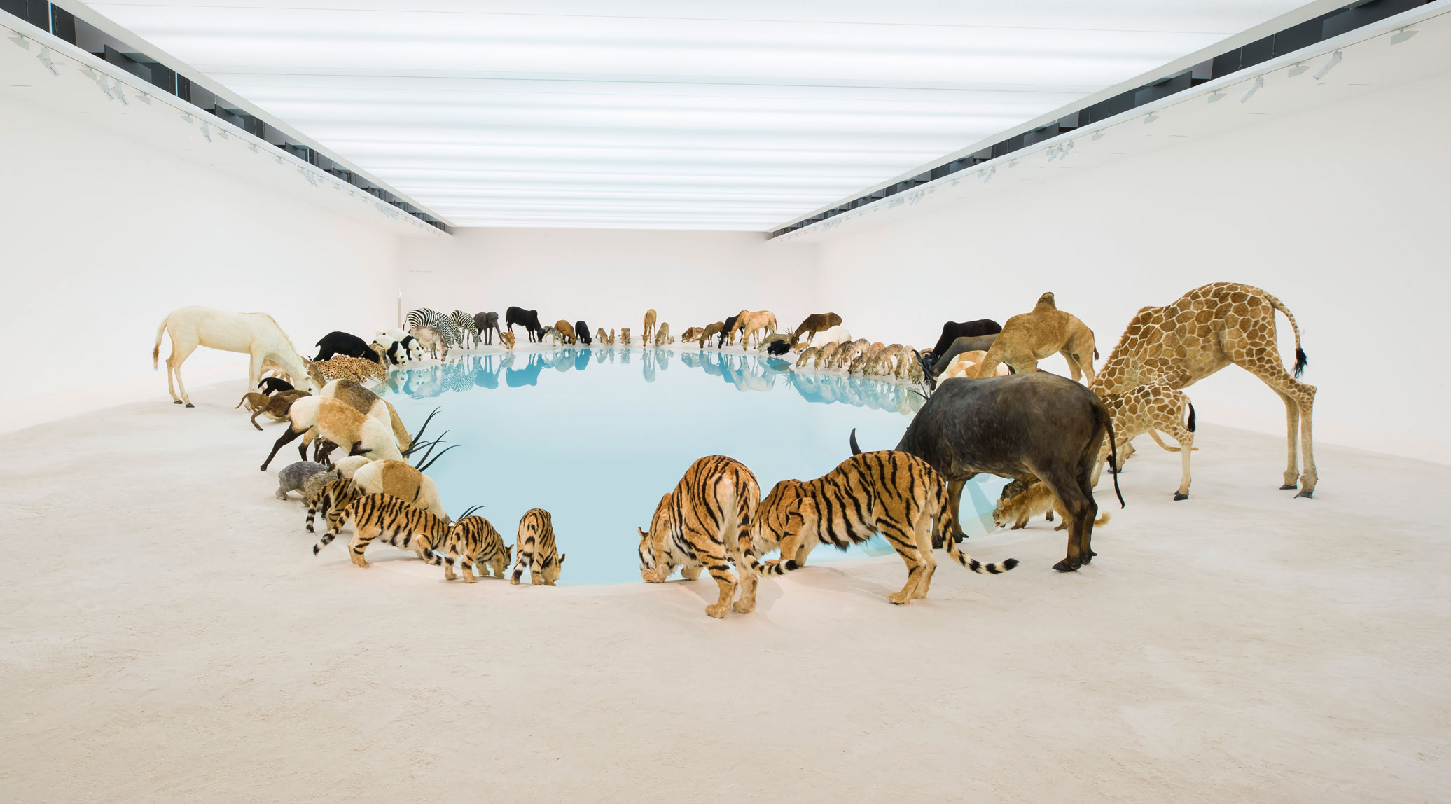 Heritage, 2013 - Cai Guo Qiang - Installation view, Queensland Gallery of Modern Art, Brisbane, 2013. As featured in our book Animal: Exploring the Zoological World