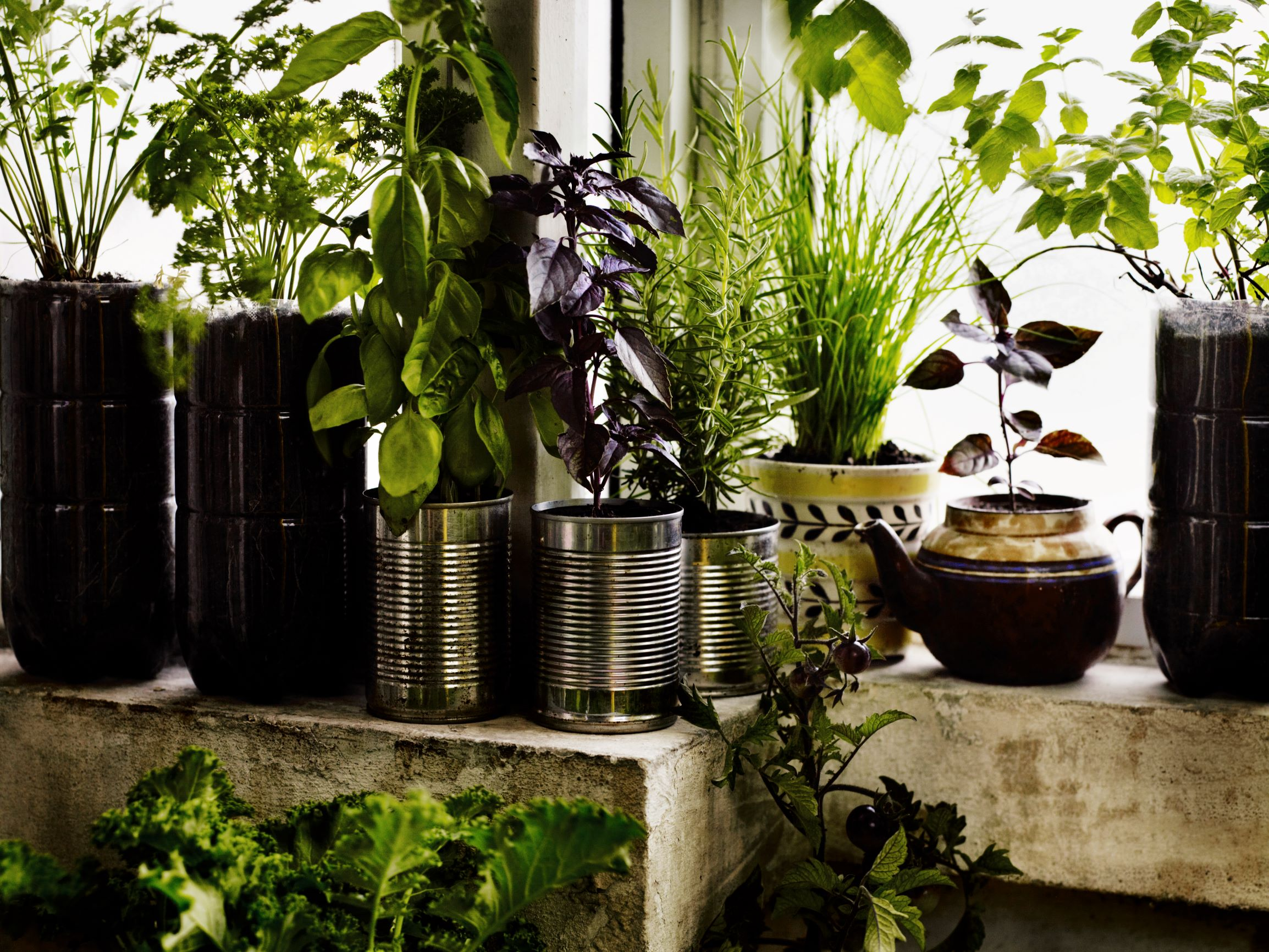 A small container herb garden. All pictures from Growing Fruit & Vegetables in Pots by Aaron Bertelsen