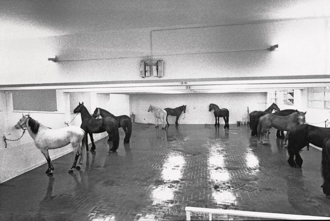 How Jannis Kounellis and 12 horses made an Arte Povera masterpiece