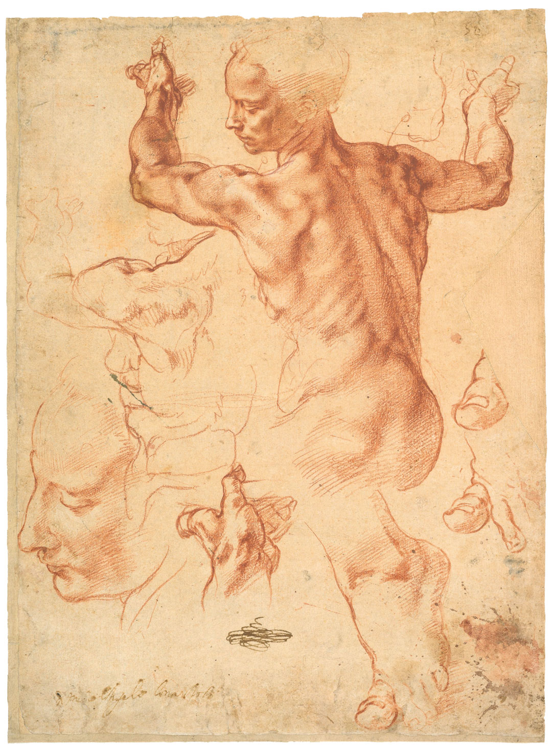 Studies for the Libyan Sibyl, c.1510–11, Michelangelo