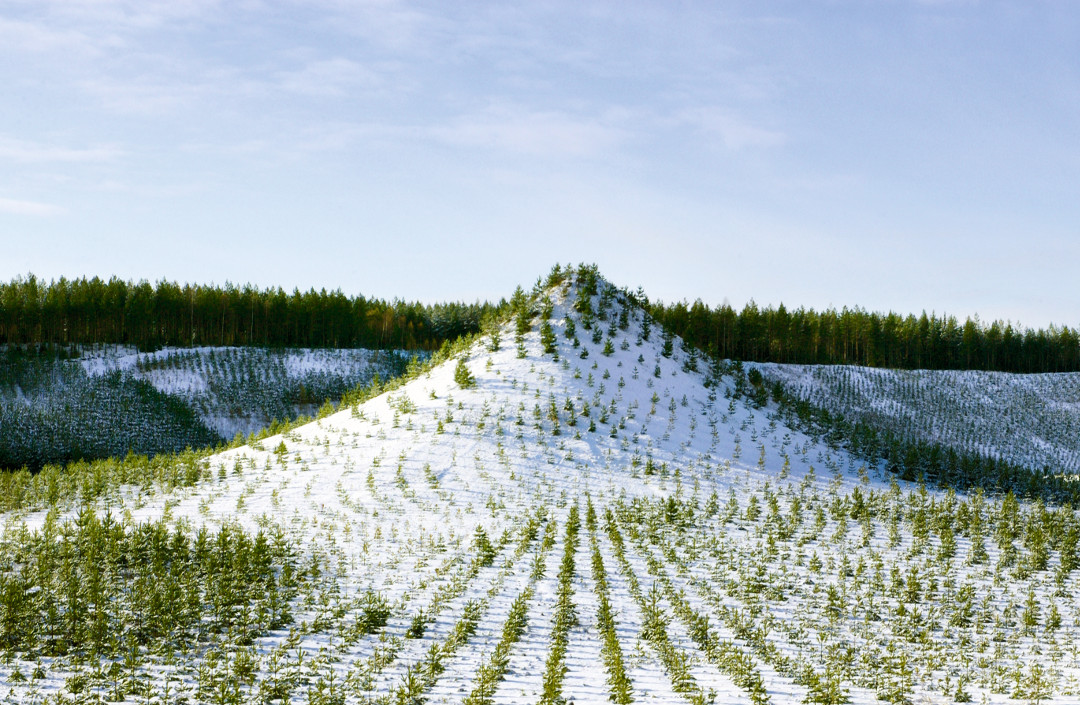 Tree Mountain – a Living Time Capsule – 11,000- Trees, 11,00 People, 400 Years, 1992-6, Pinsiönkankaantie, Finland, by Agnes Denes