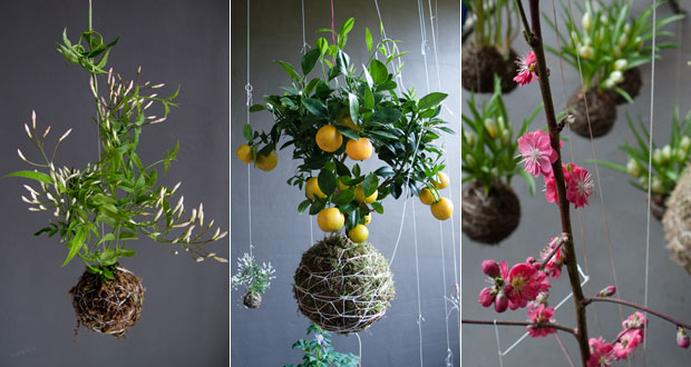A selection of String Gardens – an ideal way to create an indoor garden