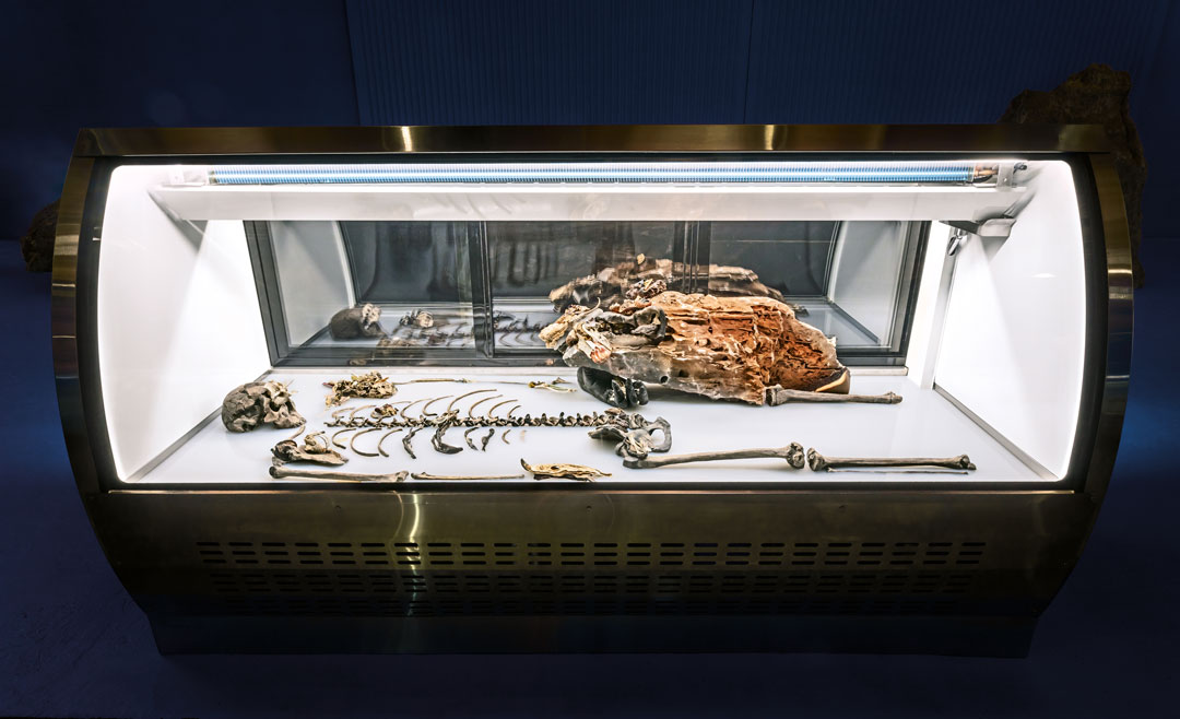 Adrián Villar Rojas, The Theatre of Disappearance, 2017.  Freezer, white silicone, recreation of Homo Ergaster skeleton 'Nariokotome Boy', cast of orangutan's foot, octopus slice, cold cuts and banana peel (from Rinascimento, 2015), igneous rock, vanadinite crystal, mollusc shells, butterfly wings, dried fruits and vegetables, fungi, cake, hippocampus, collected in Los Angeles, Erfoud, Istanbul, Kalba, New York, Rosario and Turin, 210 x 82 x 120 cm. Installation view at the Geffen Contemporary at MoCA, Los Angeles, 2017. Artwork © Adrián Villar Rojas