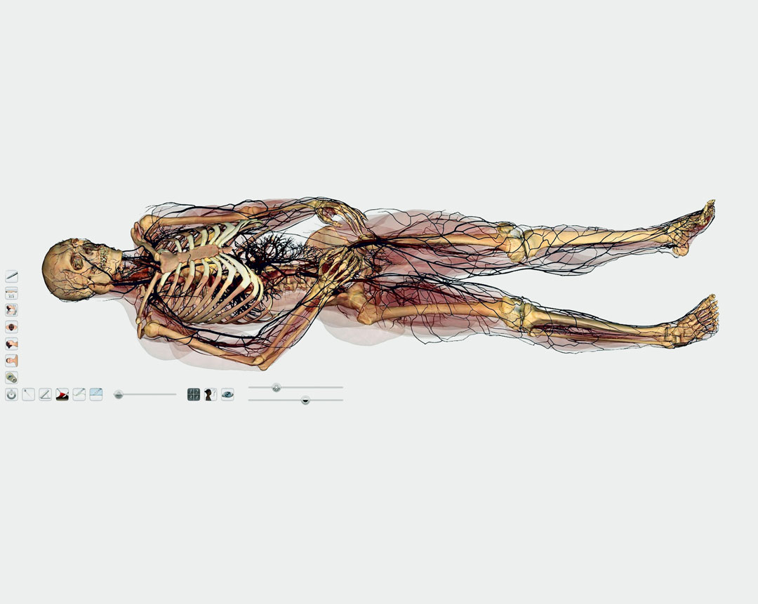 The Art of Anatomy - The Anatomage Table