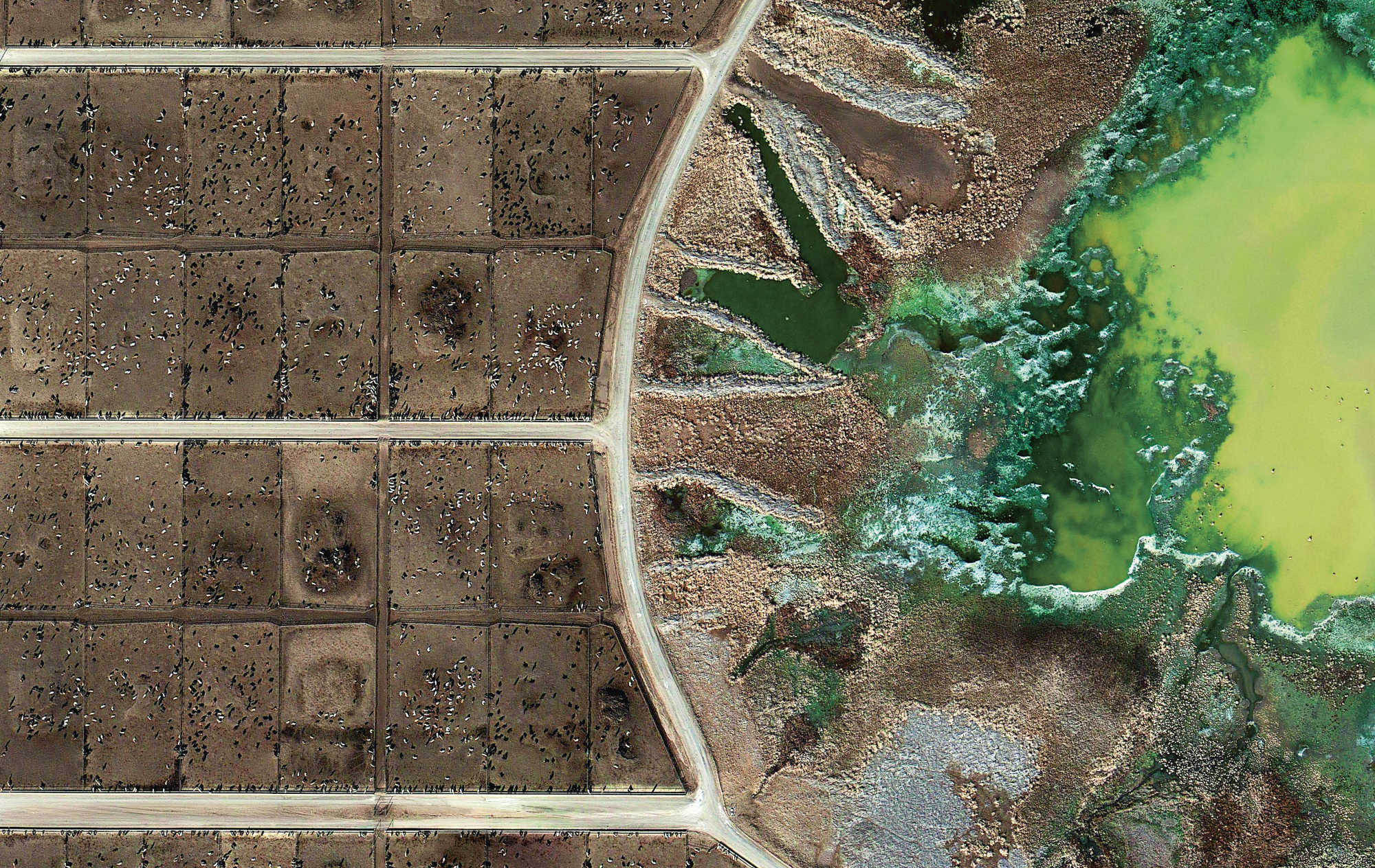Feedlots, Mishka Henner, 2012–13. Tascosa Feedyard, Bushland, Texas (detail), 2012. Feedlots are cesspools ofraw animal waste being treated by highly polluting chemicals.