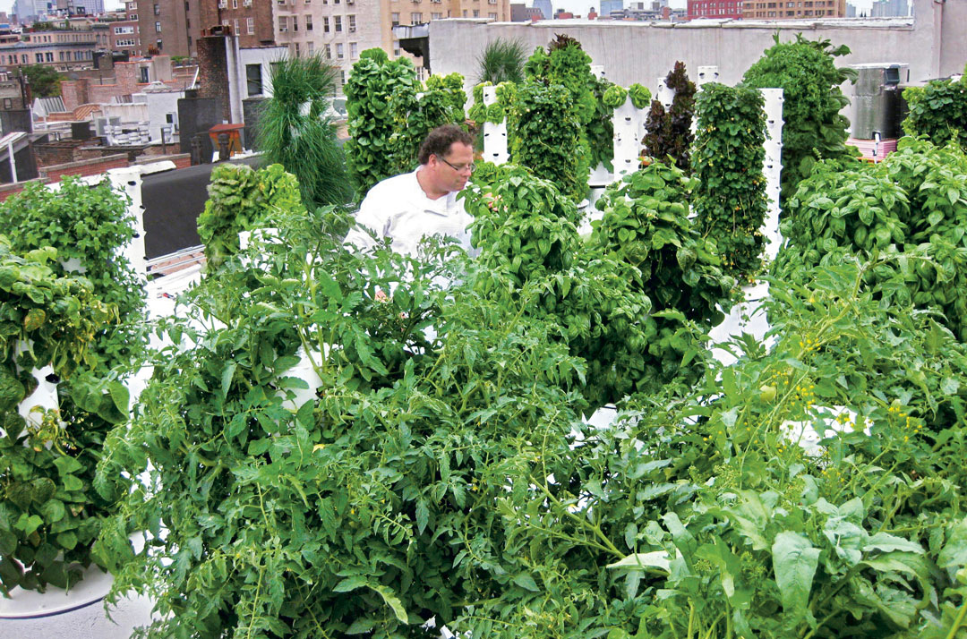 John Mooney in his rooftop garden at Bell, Book & Candle, Manhattan. As featured in The Garden Chef
