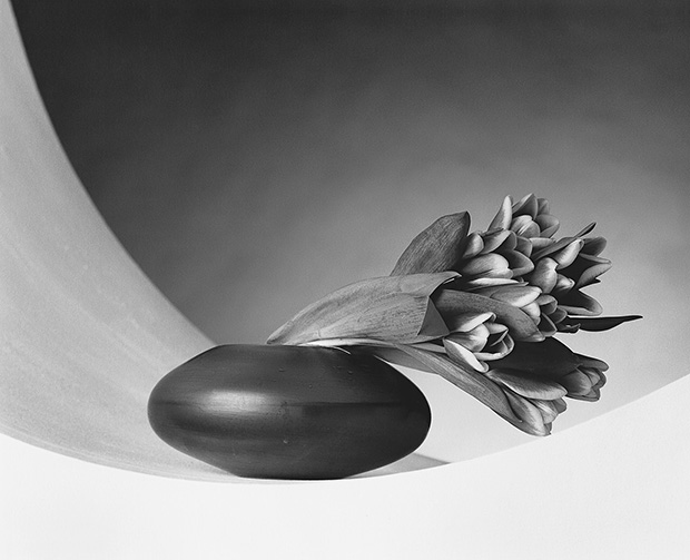Robert Mapplethorpe, Tulips, 1987, Gelatin Silver Print © Robert Mapplethorpe Foundation. Mapplethorpe Flora: The Complete Flowers, Phaidon