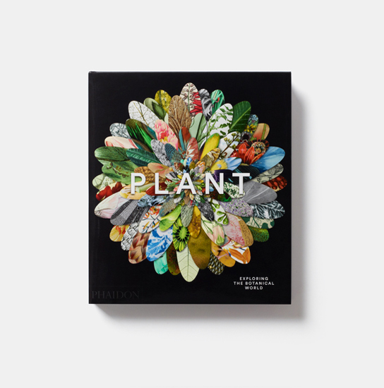 The cover of Plant: Exploring the Botanical World
