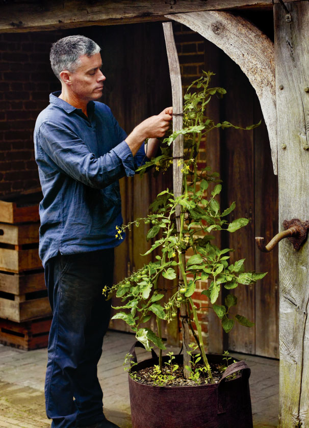 Bertelesen tends to his tomato plants at Great Dixter