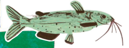 A catfish illustration from United Tastes of America
