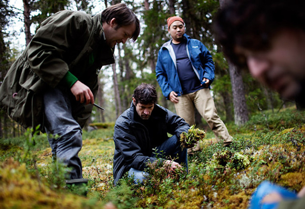 Daniel Patterson (centre) and David Chang (back) forage in Finland with Cook It Raw co-founder Rene Redzepi (left)