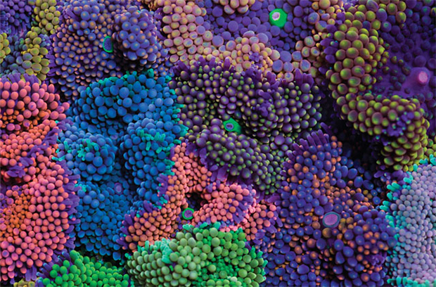 Coral images - Coral Morphologic