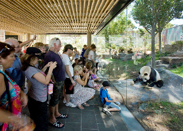 HASSELL's Giant Panda Forest at Adelaide Zoo