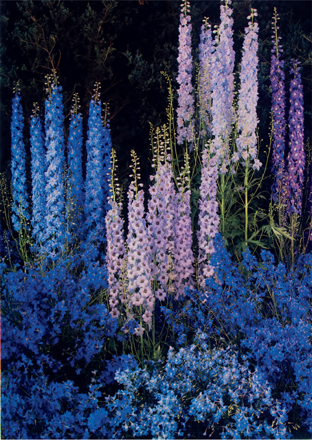 Delphiniums by Edward Steichen, 1940. Dye imbibition print, 33 °— 23.4 cm / 13 °— 91/4 in George Eastman Museum, Rochester, New York. From Plant
