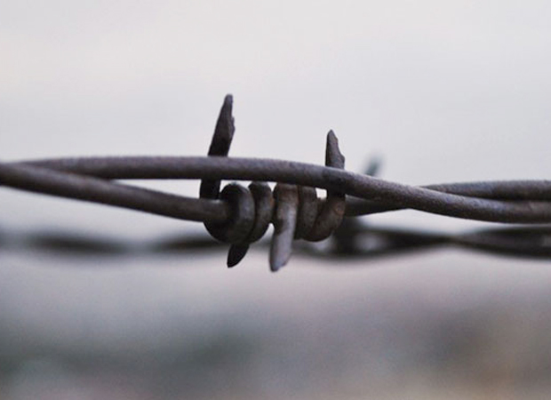 'Devil's rope' aka - barbed wire, makes an unusual object of appreciation