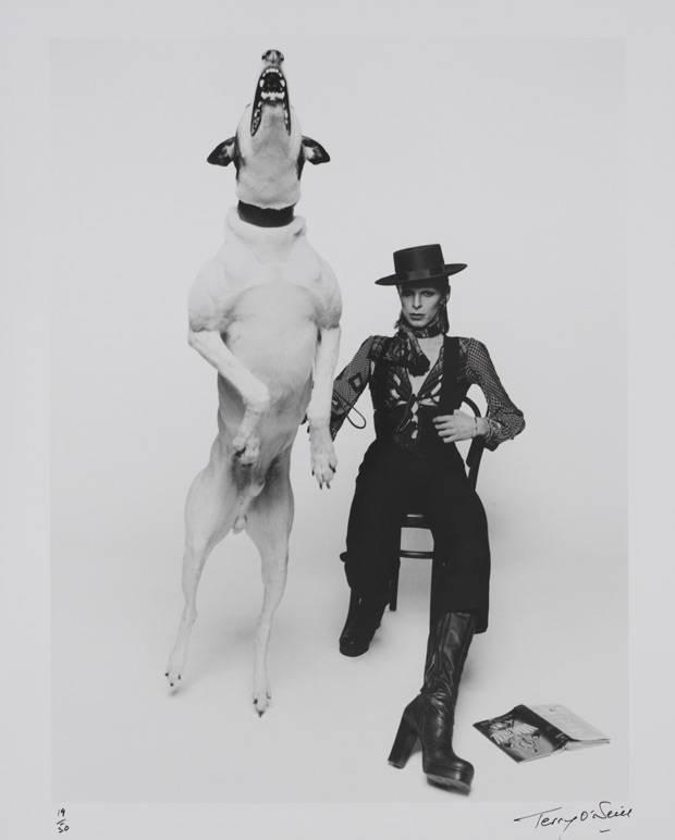 Diamond Dogs promo shoot copyright The David Bowie Archive 2012 image courtesy V&A Images