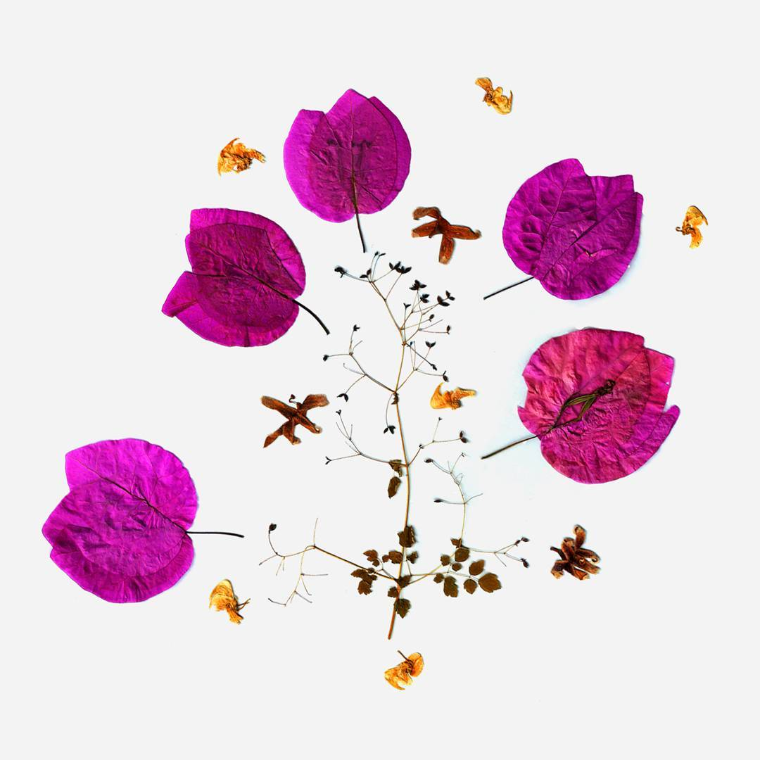 Aakriti Khurana's dried leaves and flowers submission (image courtesy of @_aakritikhurana)