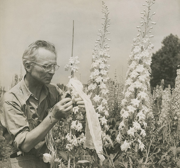 Edward Steichen with delphiniums (c. 1938), Umpawaug House (Redding, Connecticut). Photo by Dana Steichen. Gelatin silver print. Edward Steichen Archive, VII. Image courtesy of The Museum of Modern Art Archives