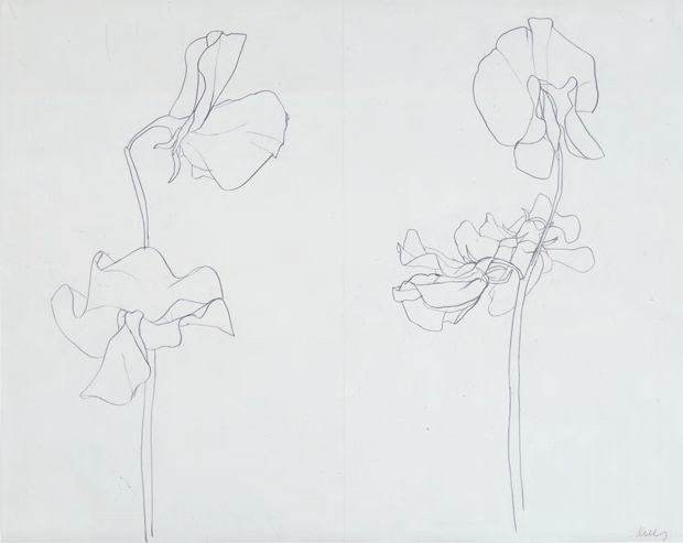 Sweet Pea (1960) by Ellsworth Kelly. From Plant: Exploring the Botanical World