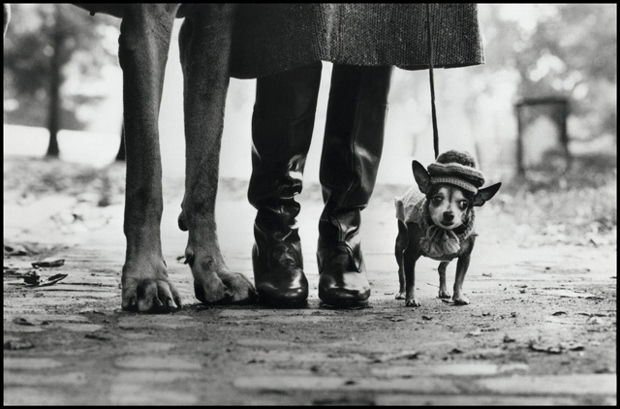 Elliott Erwitt, New York (1974) from Le Mois de la Photo's Subtle Strangeness exhibition