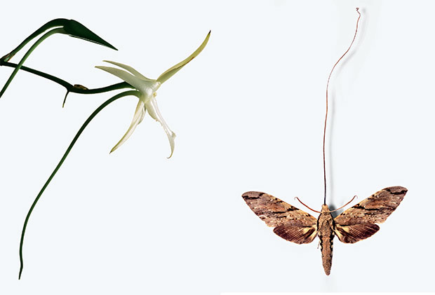 The search for Darwin's moth | Photography | Agenda