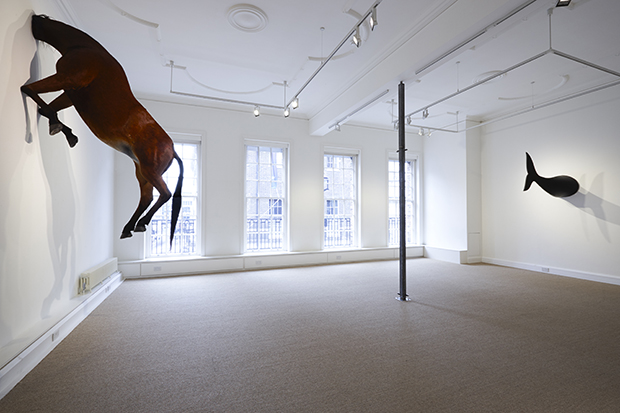 It's horse v dolphin in new Francesco Bonami show