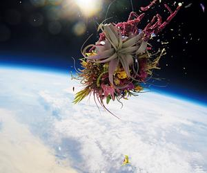 Space travel, slow food,  Fauvism and today's floral design