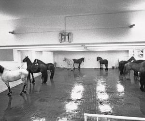 When Jannis Kounellis painted with horses