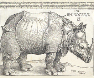 Astonishing Animals - The Rhinoceros