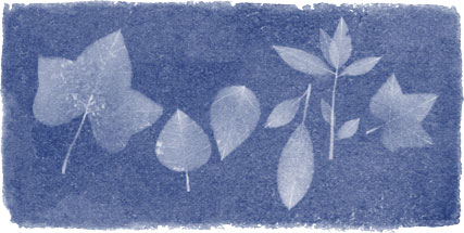 The Google Doodle honouring Anna Atkins