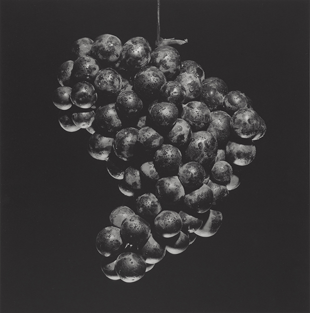 Grapes, 1985, by Robert Mapplethrope. Gelatin silver print Image: 38.5 x 38 cm (15 3/16 x 14 15/16 in.) Jointly acquired by the J. Paul Getty Trust and the Los Angeles County Museum of Art, with funds provided by the J. Paul Getty Trust and the David Geffen Foundation, 2011.7.20 © Robert Mapplethorpe Foundation