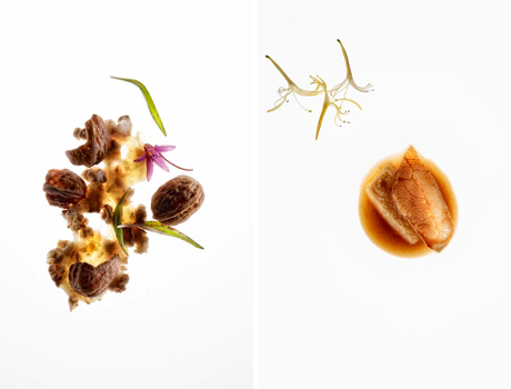 José Luis López de Zubiria's award winning photographs from Mugaritz restaurant