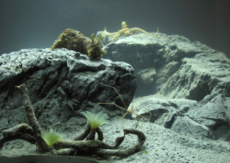 Pierre Huyghe, <em>Aquarium Project</em> (2011)