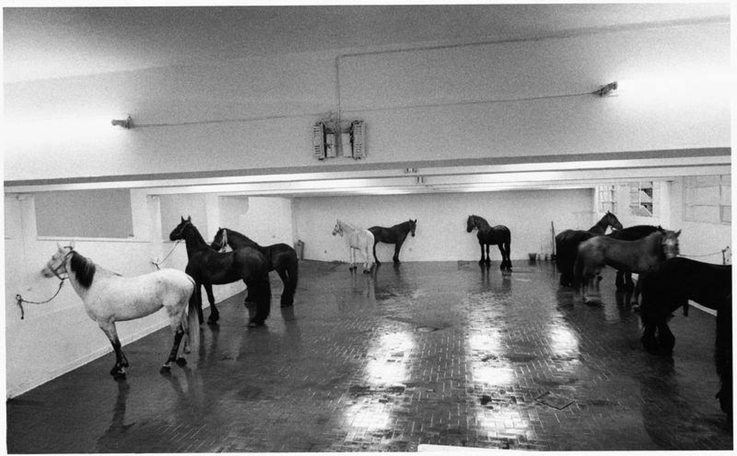 Untitled (12 horses), (1969) by Jannis Kounellis at the L'Attico Gallery, Rome