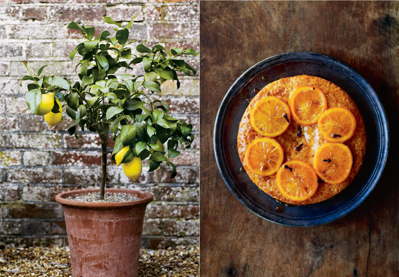 From Pot to Plate: How to Grow and Cook Lemons