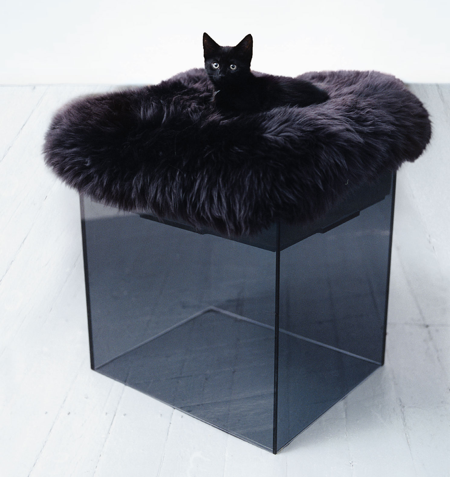 Loulie Cat Tower by BOWOW London