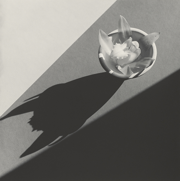 Orchid, 1987, by Robert Mapplethorpe. Gelatin silver print Image: 49.1 x 49.2 cm (19 5/16 x 19 3/8 in.) Gift of The Robert Mapplethorpe Foundation to the J. Paul Getty Trust and the Los Angeles County Museum of Art, 2012.52.23 © Robert Mapplethorpe Foundation