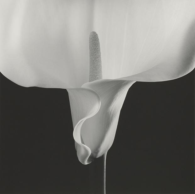 erotic gelatin design