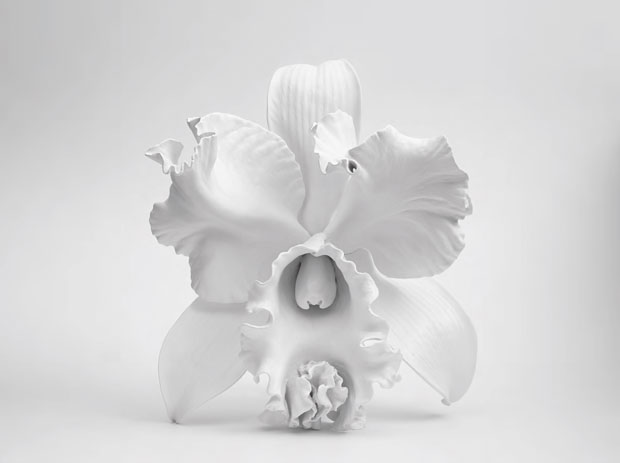 Seed of the Baroque (2014) by Marc Quinn, from Plant: Exploring the Botanical World