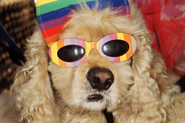 Dog In Sunglasses on Venice Beach (1998) by Martin Parr (the one and only time you'll see a dog in sunglasses on phaidon.com)