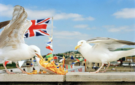 Martin Parr's Think of England (1996)