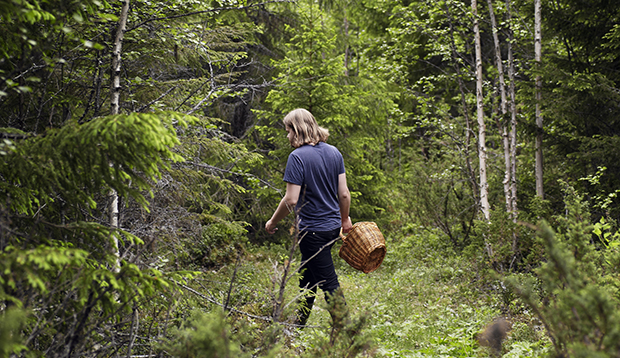 Magnus Nilsson foraging for the Fäviken kitchen