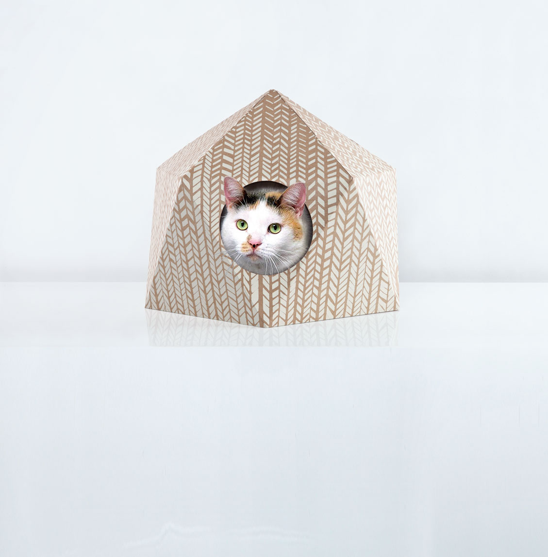 Butterfly poses in The Cat Cube by Delphine Courier from Pet-tecture