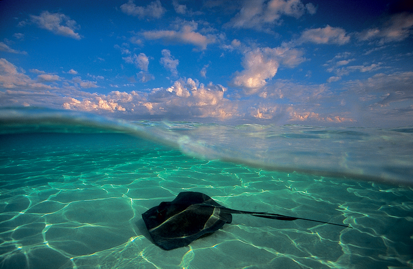 David Doubilet, Stingray in the late afternoon (1990), North Sound, Grand Cayman, West Indies