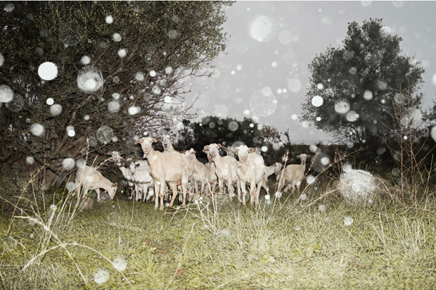 Almas - the rain is a handsome animal, January 2013 by Petros Koublis, from In Landscapes