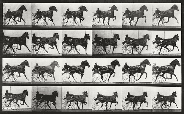Attitudes of Animals in Motion, Horses, Trotting Edginton No.34 (1879) by Eadweard Muybridge, as reproduced in The Photography Book