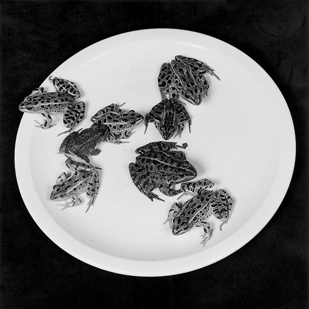 Frogs 1984 © Robert Mapplethorpe Foundation. Used by permission Courtesy Alison Jacques Gallery, London