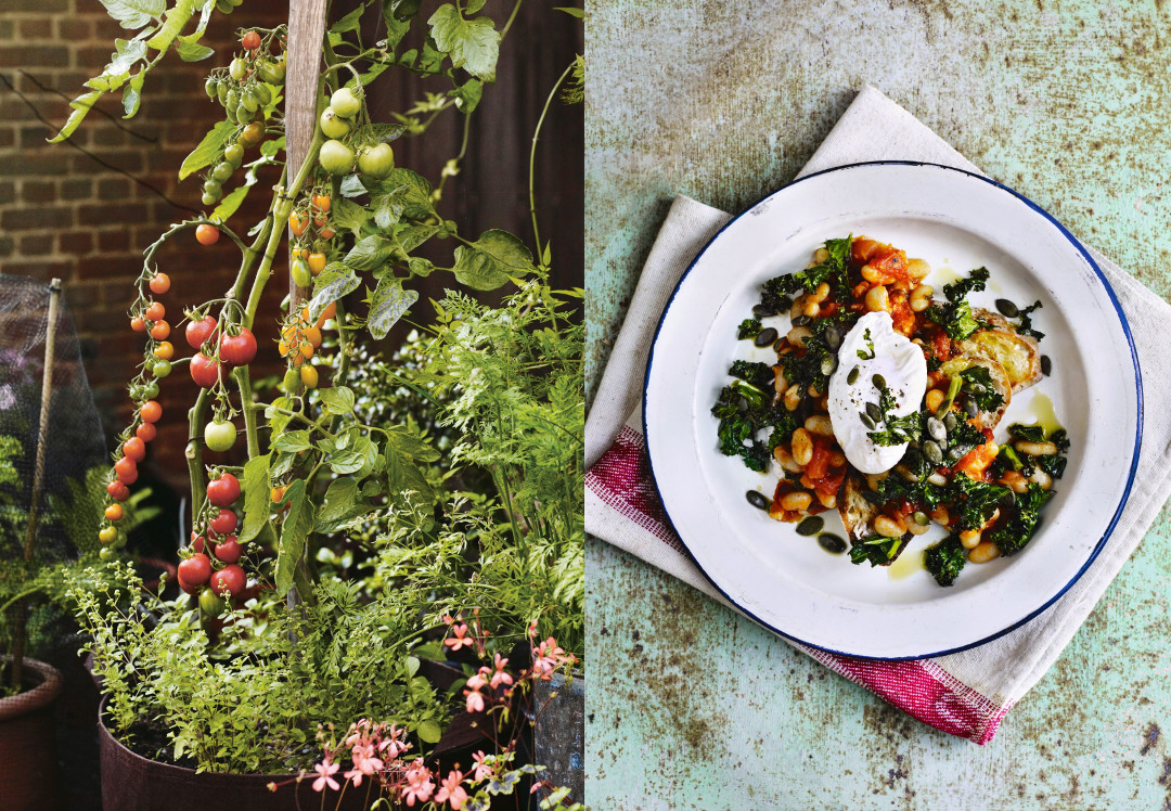 From Pot to Plate: How to grow and cook tomatoes