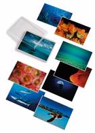 David Doubilet: Water Light Time Postcards