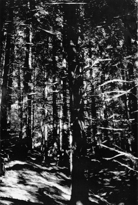 Wald (Briol I) (2008) by Wolfgang Tillmans